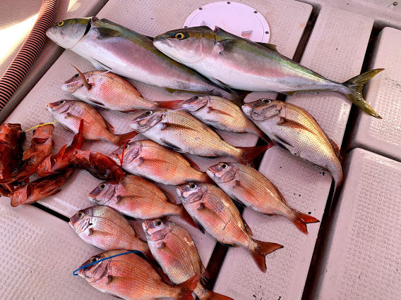 将 釣り船 鯛